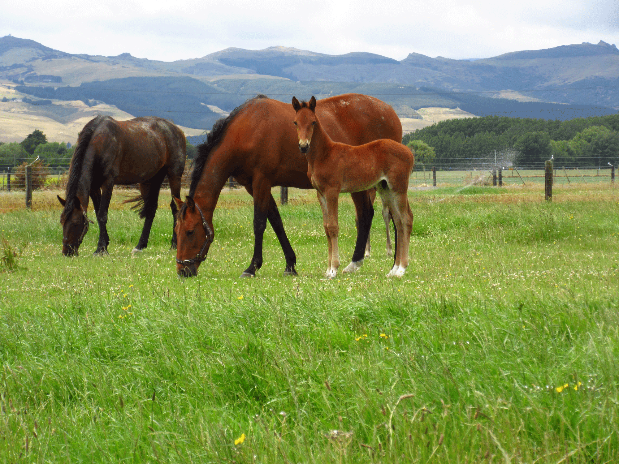 Equine - NRM - Feed To Succeed